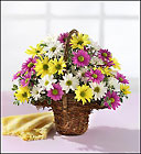 Spring Daisy Basket Davis Floral Clayton Indiana from Davis Floral