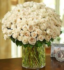 100 Premium White <br> Roses in a Vase  Davis Floral Clayton Indiana from Davis Floral