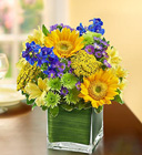 Fields of Europe for <br>Summer in Cube Vase Davis Floral Clayton Indiana from Davis Floral
