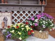 "12"" & 16"" <BR>Deluxe Combo Hanging Baskets Davis Floral Clayton Indiana from Davis Floral"