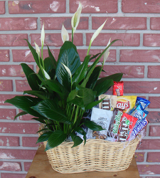 Plants and Snacks for Dad Davis Floral Clayton Indiana from Davis Floral