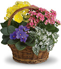 Spring Has Sprung Mixed Basket Davis Floral Clayton Indiana from Davis Floral